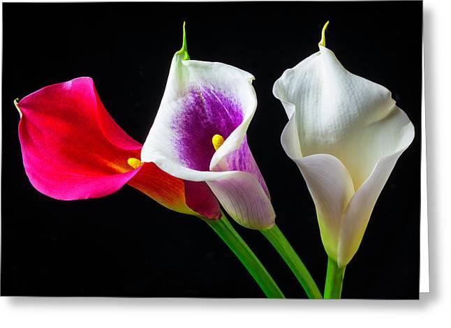 Three Wonderful Calla Lilies Greeting Card by Garry Gay