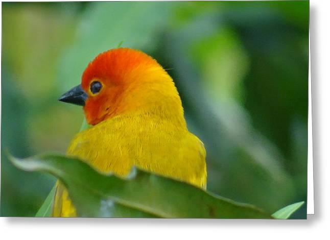 Through A Child's Eyes - Close Up Yellow And Orange Bird 2 Greeting Card by Exploramum Exploramum