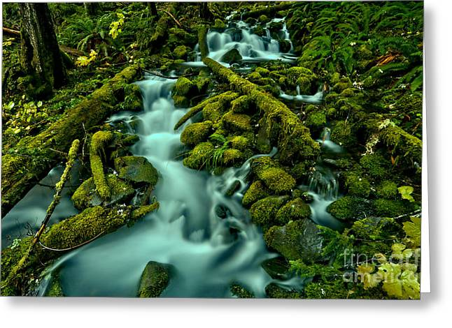 Through Moss Covered Boulders And Logs Greeting Card by Adam Jewell