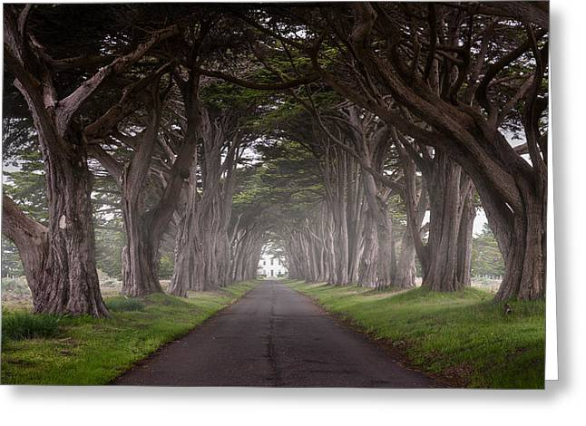 Through The Cypress Greeting Card