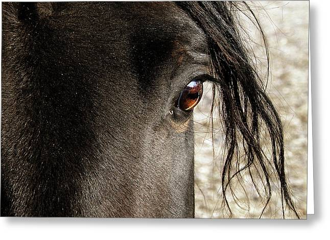 Hovind Greeting Cards - Through the Eye of a Stallion Greeting Card by Scott Hovind
