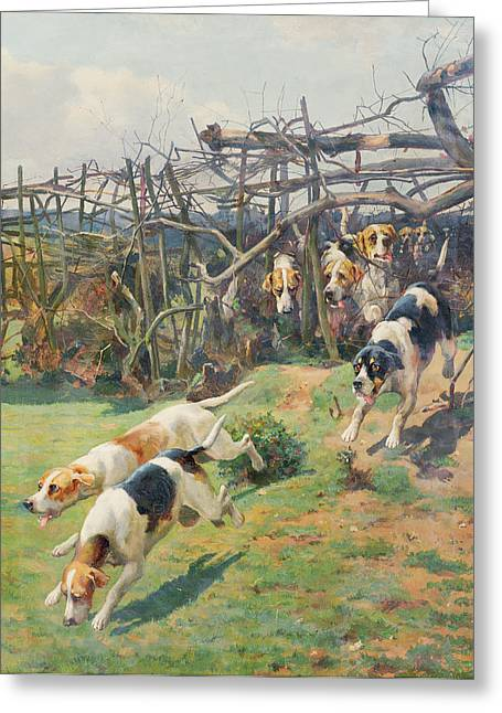 Through The Fence Greeting Card by Arthur Charles Dodd