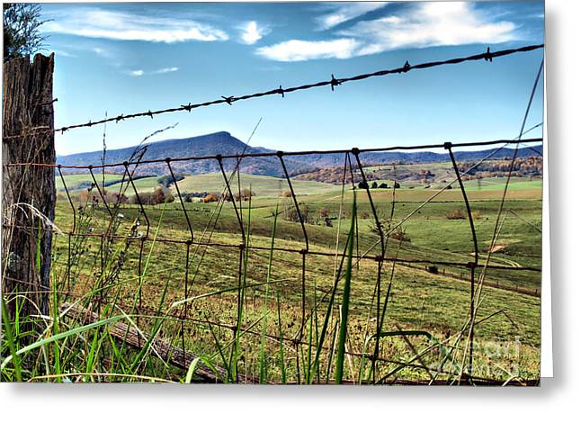 Through The Fence Greeting Card by Kathy Jennings