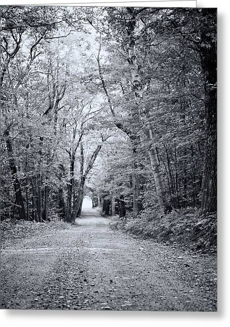 Through The Forest Greeting Card by Sue OConnor