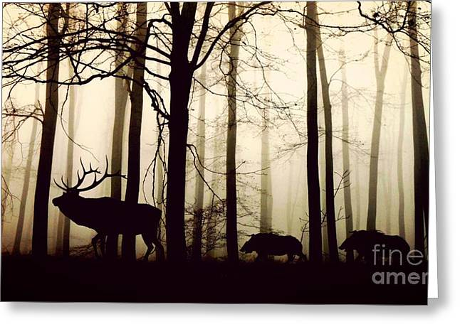 Through The Forest Greeting Card by Thomas Jones