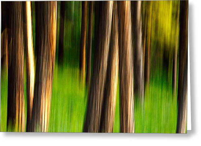 Through The Forest Greeting Card by Todd Klassy