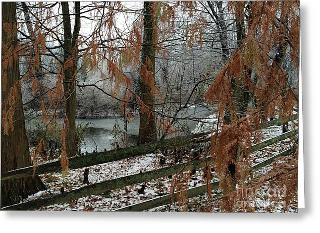 Through The Leaves Of A Winter Landscape  Greeting Card