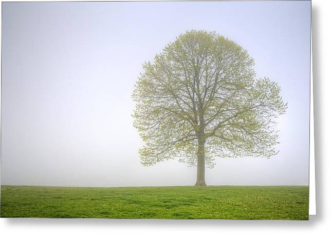 Rogers Photographs Greeting Cards - Through The Mist Greeting Card by Scott Norris