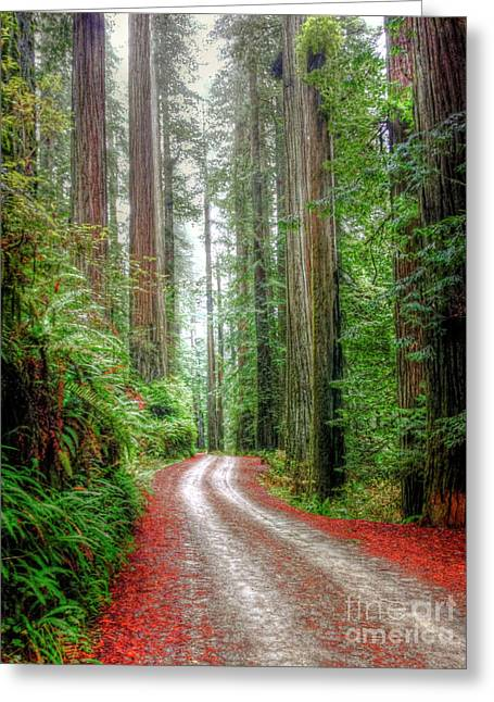 Through The Redwood Forest Greeting Card by Juli Scalzi