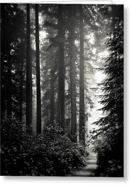 Through The Redwoods - Black And White Greeting Card