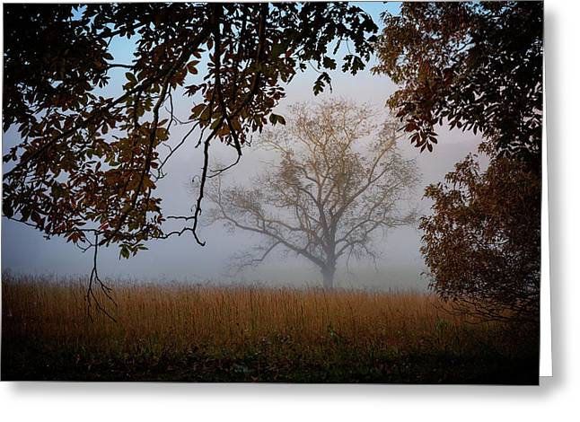 Through The Trees In The Mist Greeting Card