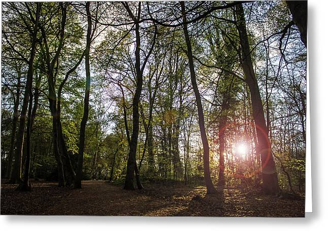 Through The Trees Greeting Card by Martin Newman
