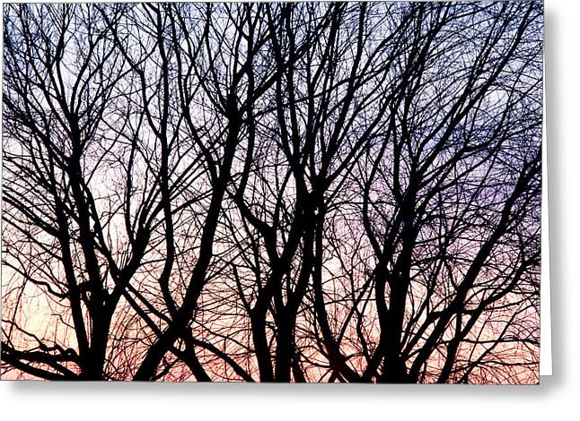 Through The Trees Greeting Card by Martin Rochefort