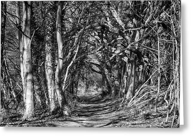 Through The Tunnel Bw 16x20 Greeting Card