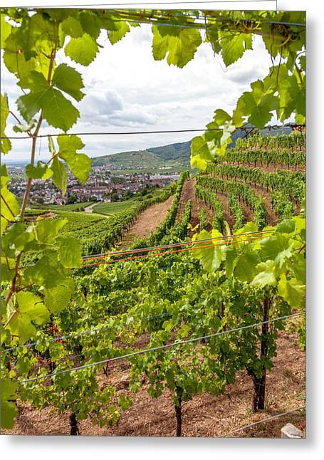 Through The Vineyards Of Turckheim Greeting Card