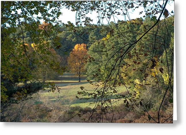 Through The Woods At The Sudbury River Shores, Concord, Massachusetts Greeting Card
