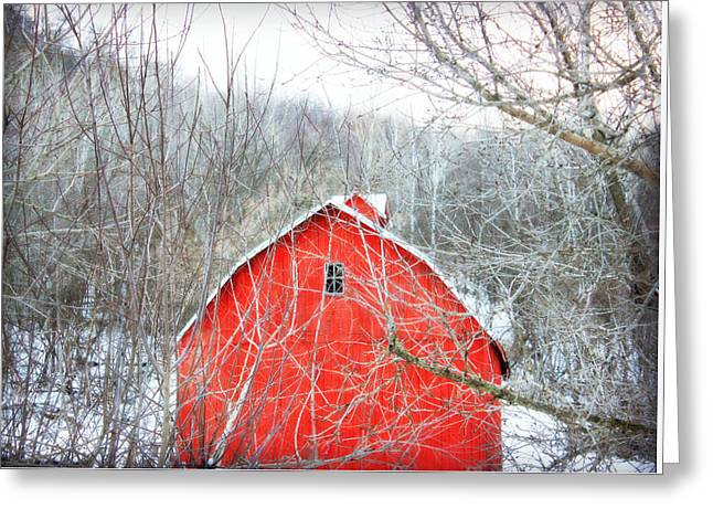 Through The Woods Greeting Card by Julie Hamilton