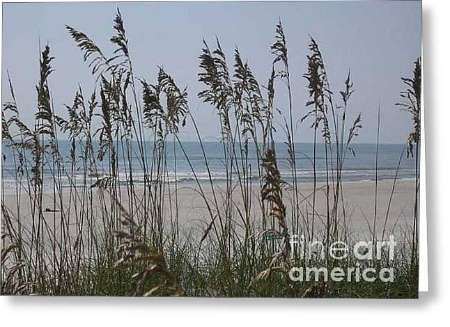 Thru The Sea Oats Greeting Card by Barb Montanye Meseroll
