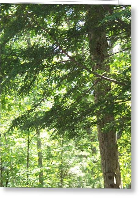 Thru The Trees Greeting Card by Rosanne Bartlett