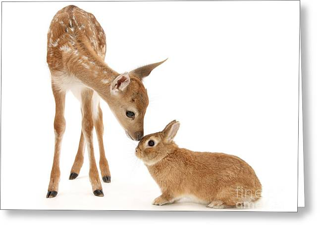 Thumper And Bambi Greeting Card