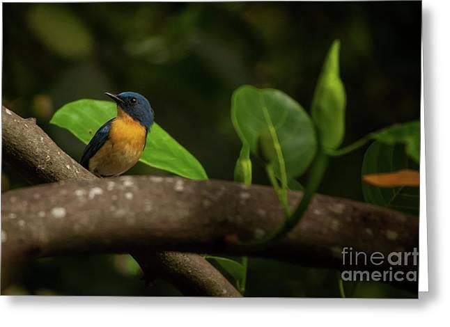 Tickell's Blue Flycatcher Greeting Card by Venura Herath