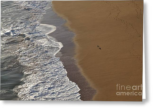 Tidal Waves And Seagull In Lagoa Greeting Card by Angelo DeVal