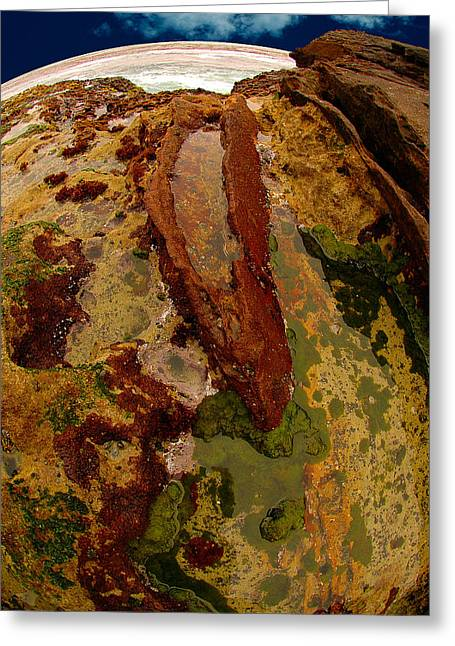 Tide Pool Greeting Card by Harry Spitz