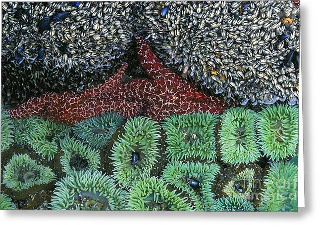 Eco System Greeting Cards - Tide Pool Greeting Card by Jim Zipp