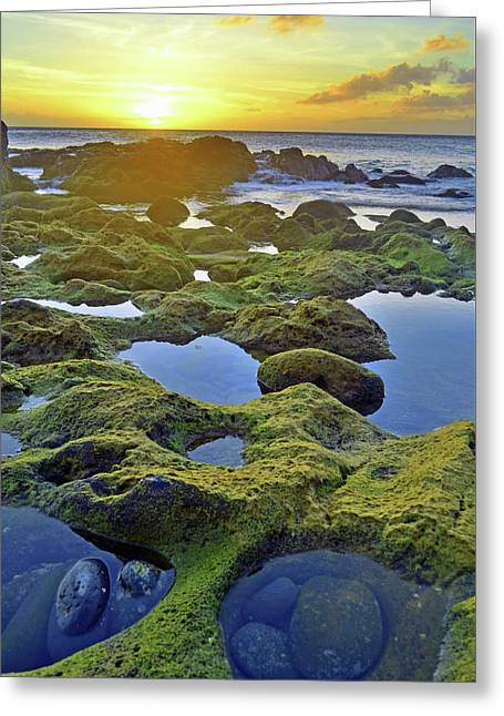 Greeting Card featuring the photograph Tide Pools At Sunset by Tara Turner