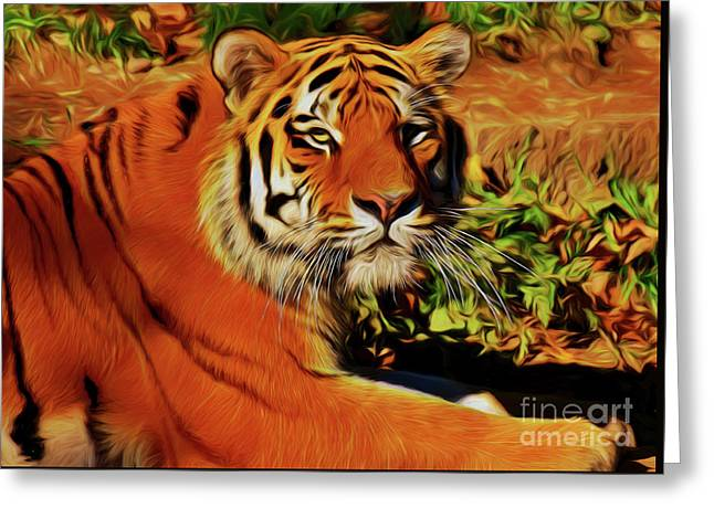 Tiger 22218 Greeting Card