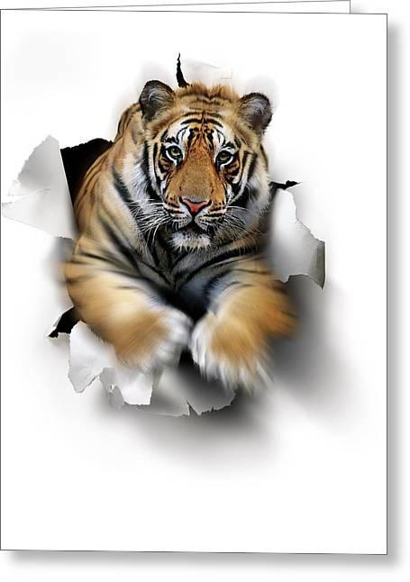Tiger, Artwork Greeting Card by Smetek