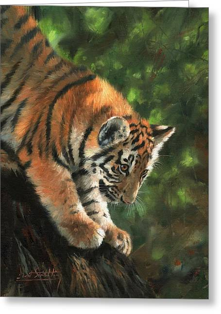 Tiger Cub Climbing Down Tree Greeting Card by David Stribbling