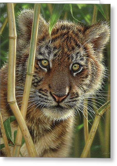 Tiger Cub - Discovery Greeting Card