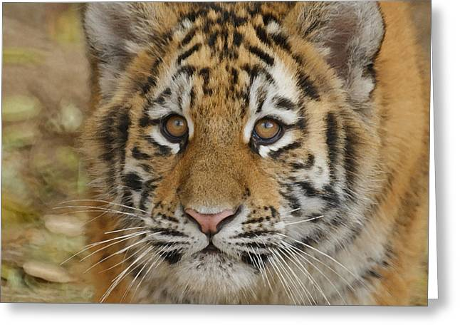 Wildcats Greeting Cards - Tiger Cub Greeting Card by Ernie Echols