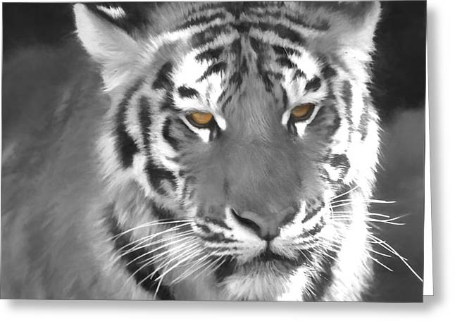 Tiger Eyes Greeting Card by Dan Sproul