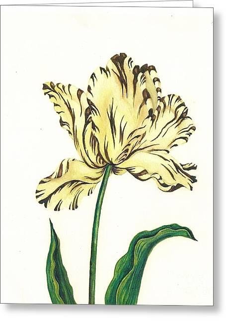 Striped Tulip Greeting Card by Margaryta Yermolayeva