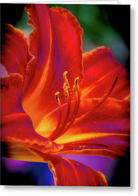Tiger Lily Greeting Card by Mark Dunton