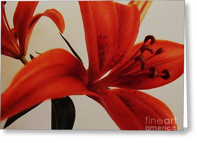Tiger Lily Greeting Card by Marsha Heiken