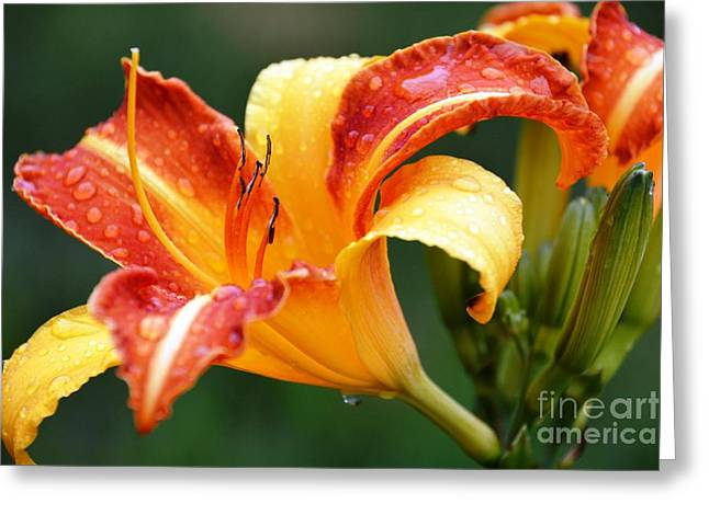 Tiger Lily Profile Greeting Card
