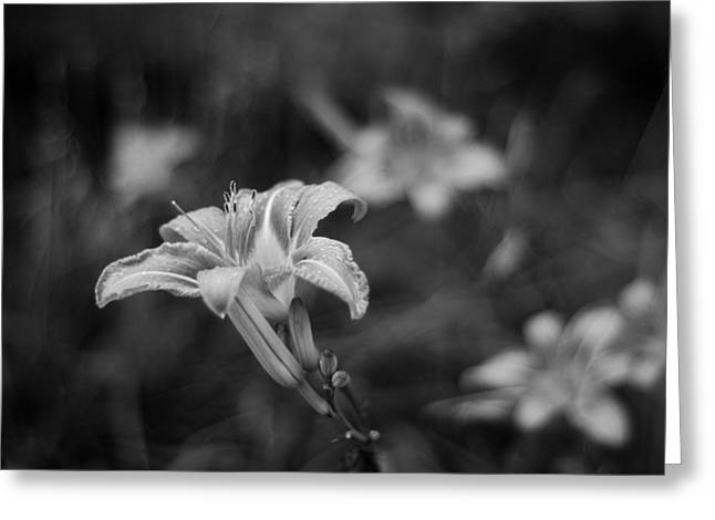Tiger Lily Too Greeting Card by Rockstar Artworks