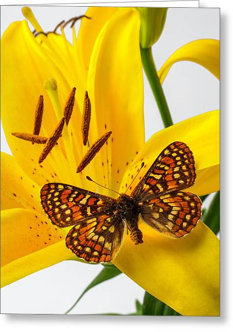 Tiger Lily With Butterfly Greeting Card by Garry Gay