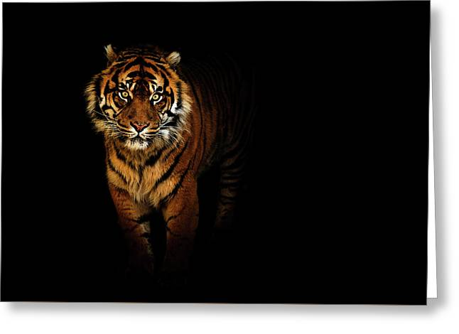 Tiger On A Black Background Greeting Card