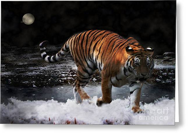 Greeting Card featuring the photograph Tiger On The Run by Jacqi Elmslie