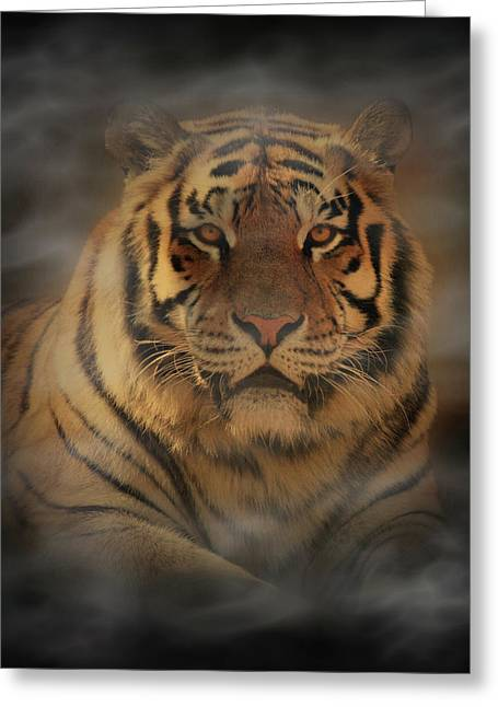 Tigers Digital Greeting Cards - Tiger Greeting Card by Sandy Keeton