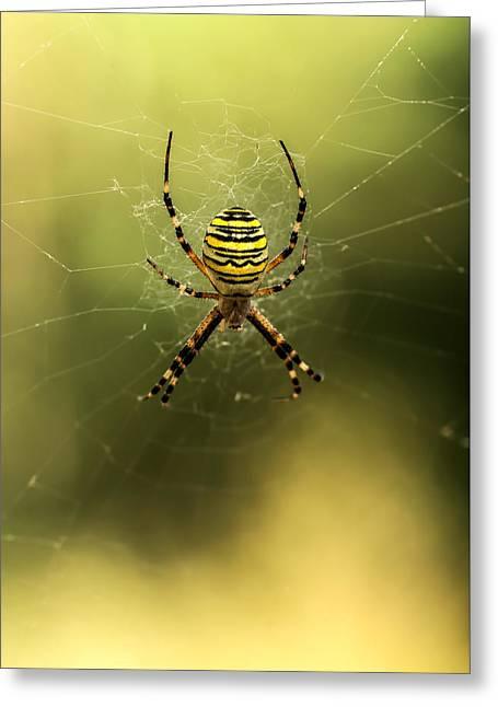 Tiger Spider Greeting Card by Jaroslaw Blaminsky