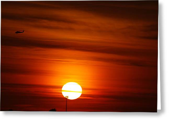 Tiger Sunset Greeting Card by Don Prioleau