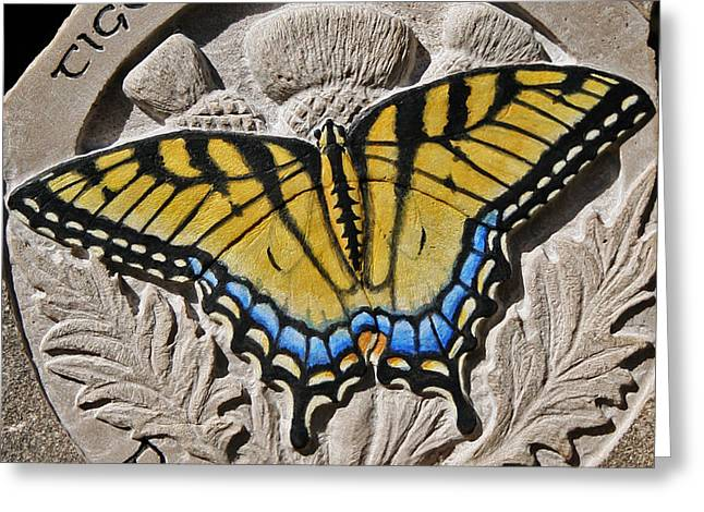 Tiger Swallowtail Greeting Card by Ken Hall