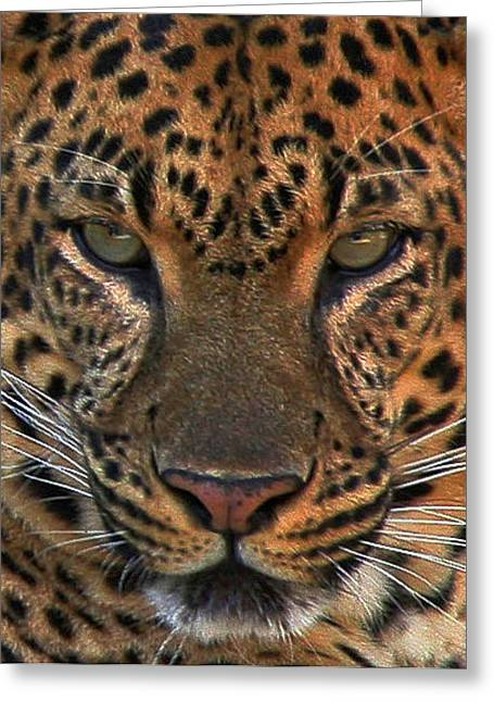 Greeting Card featuring the photograph Tiger Tiger by Carol Kinkead