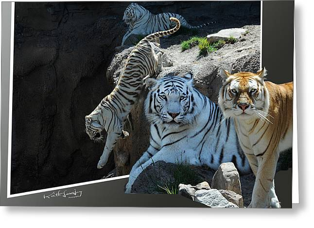 Tigers Out Of Frame Greeting Card