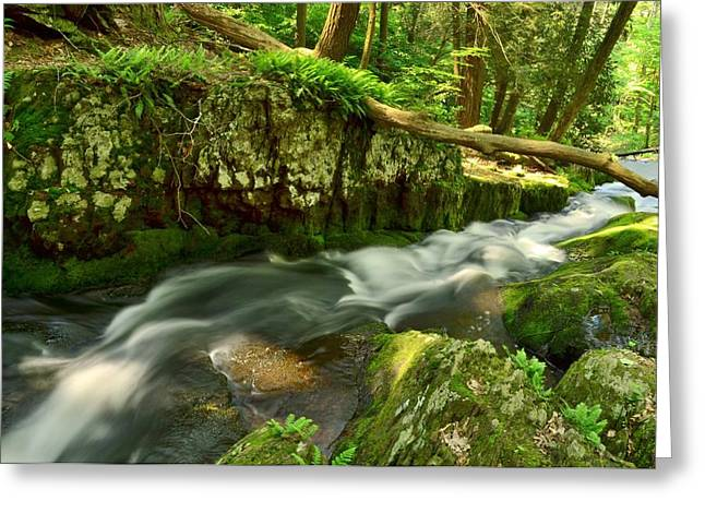 Tillmans Ravine, Stokes State Forest Greeting Card